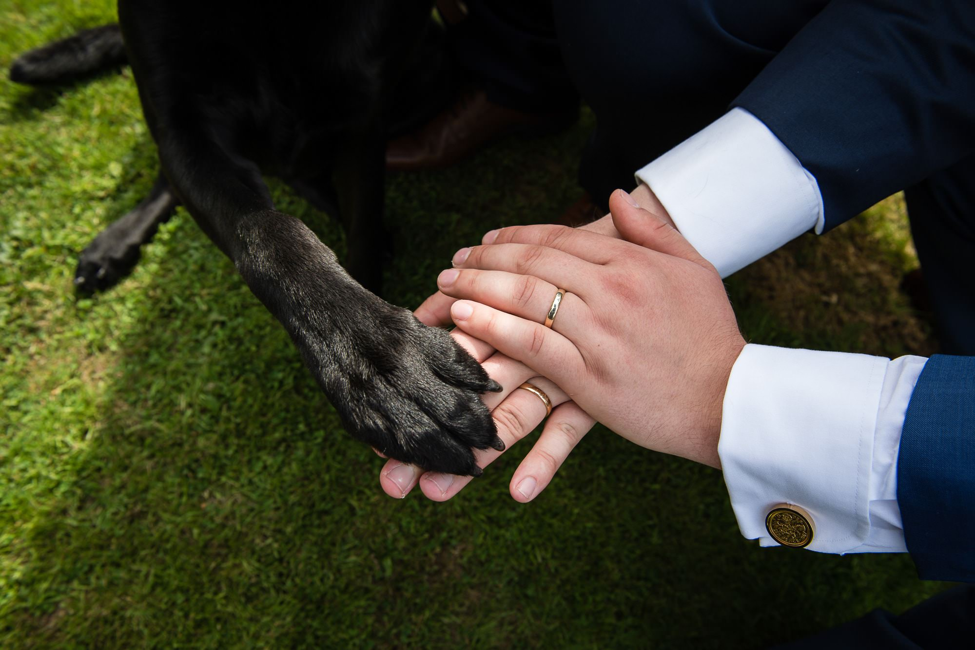 Best Dog, wedding dog